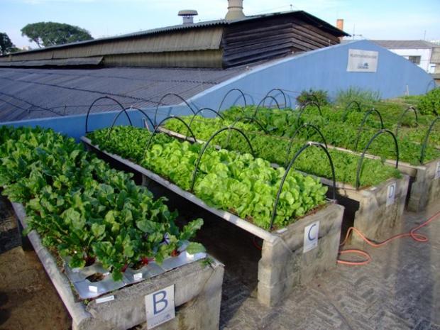 Estudo da Universidade de Sheffield revela potencial da agricultura urbana no fornecimento de alimentos