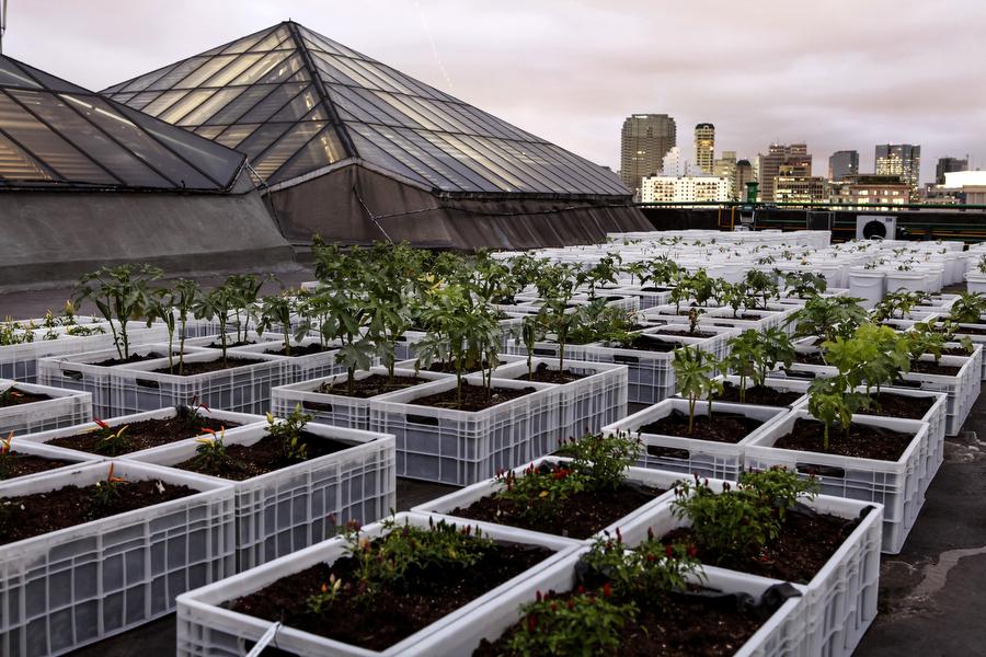 Telhados sem uso dão lugar a fazendas urbanas