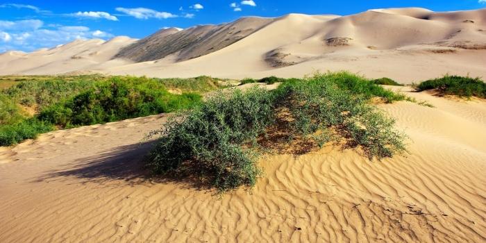 Como combater a desertificação e a mudança climática