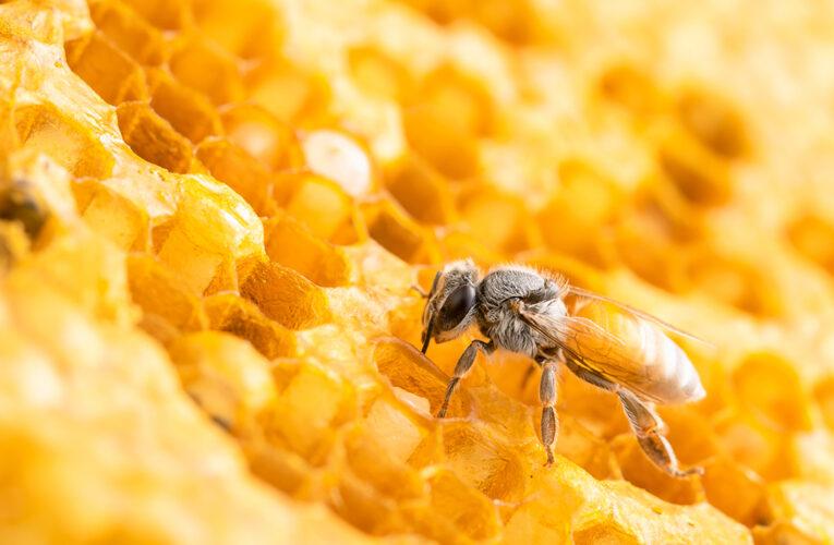 Sindiveg incorpora ações e estrutura do Movimento Colmeia Viva, que integra produção de alimentos e proteção das abelhas