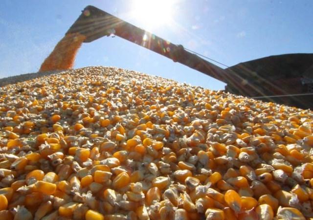 China é grande cliente da soja de mato grosso