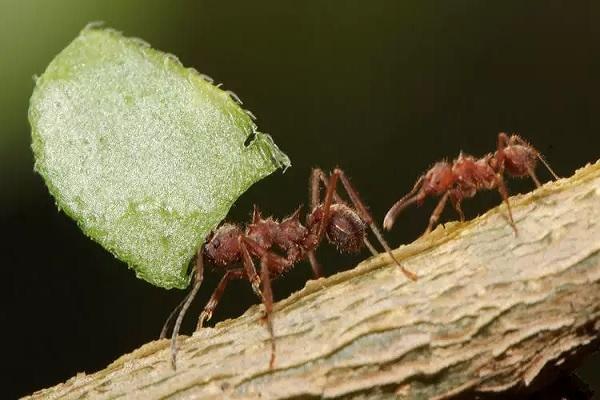 10 curiosidades incríveis sobre as formigas