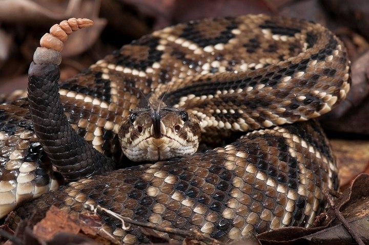 Saiba como afastar as cobras do quintal