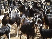 Qualidade e conservação em prol da pecuária brasileira
