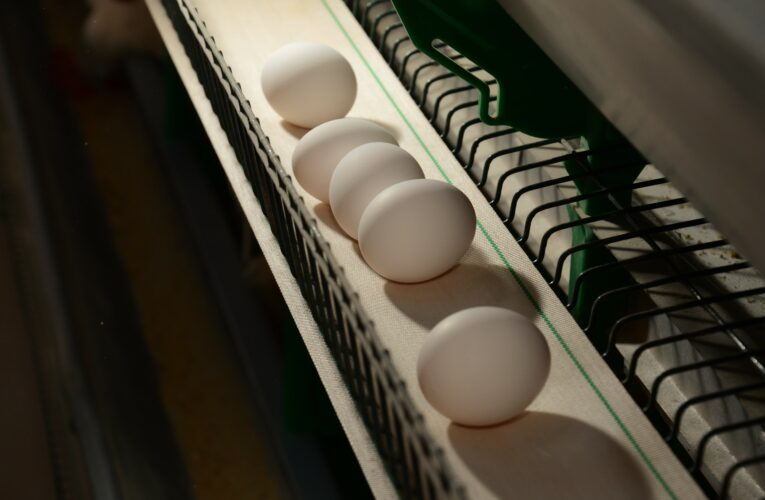 Anormalidades nos ovos geram perdas econômica