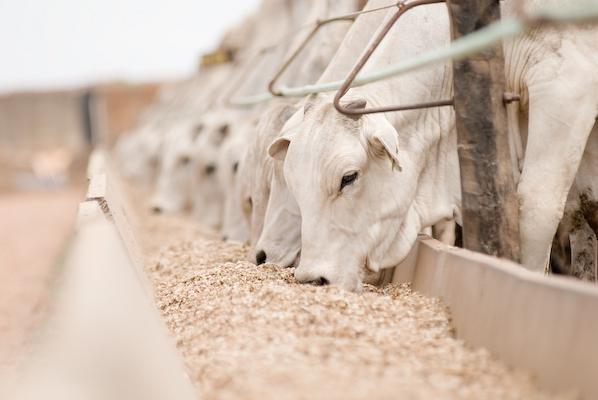 Projeto  aprovado zera imposto sobre ração de bovinos