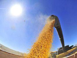 Resultados dos 10 anos da moratória da soja
