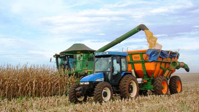 O futuro do trigo brasileiro está no Cerrado