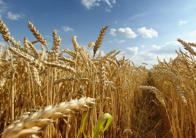 Empréstimos para a agricultura empresarial