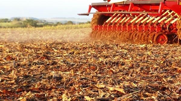 Produtores enfrentam transtornos no plantio de trigo