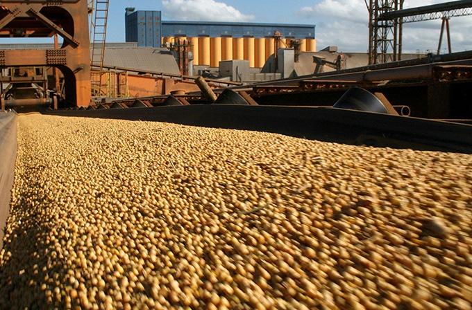 Exportação de soja do Brasil cai 12% em junho