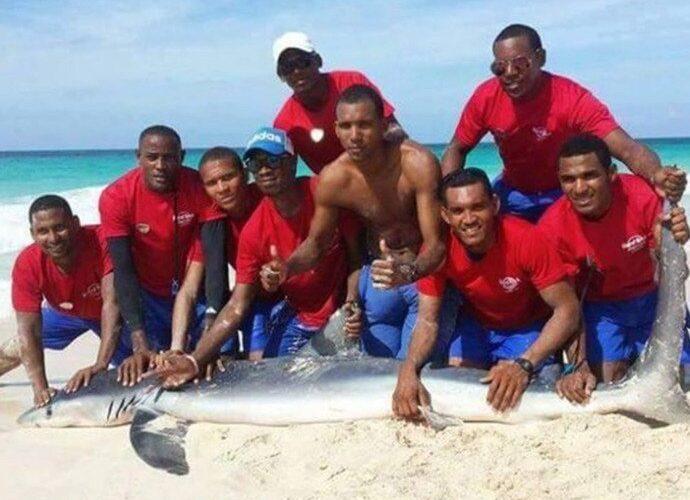 Tubarão morre ao ser arrastado para fora da água