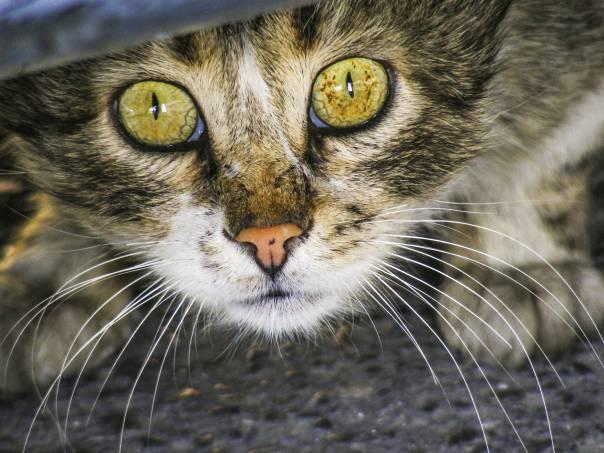 Gatos: 9 atitudes dos donos que os felinos detestam