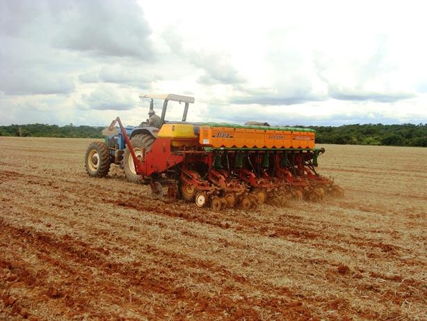 Plantio do trigo gaúcho avança e atinge 35% da área
