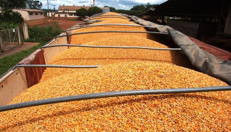 Preço mínimo do milho pode subir 47,4% em Mato Grosso