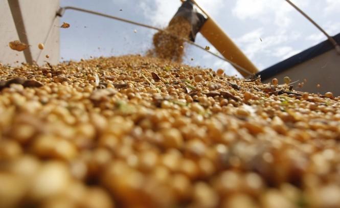 Soja acumula alta de mais de 5,5% neste mês
