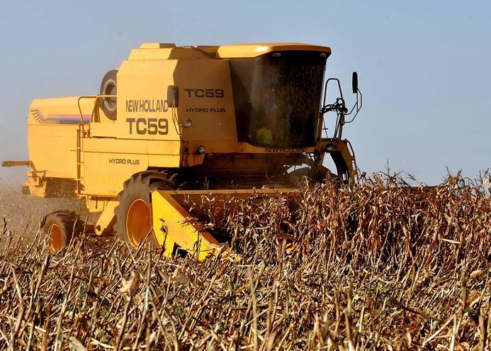 Céleres reduz estimativa para a safrinha de milho