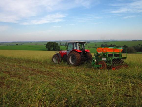 Plantio do trigo segue atrasado e atinge 24% da área