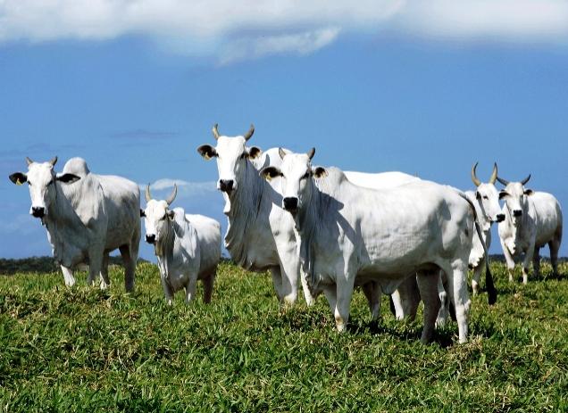 Emissão de gases do efeito estufa na Agropecuária