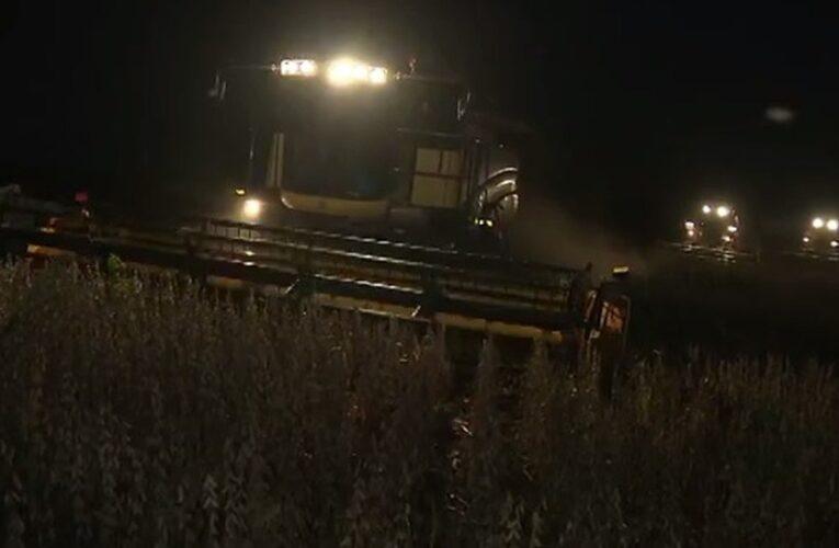 Ladrões colhem soja a noite no MT