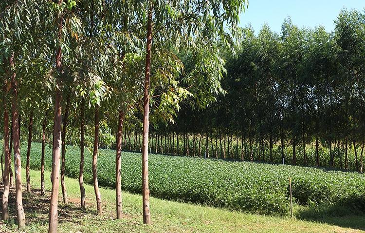 Restauração florestal e expansão agrícola
