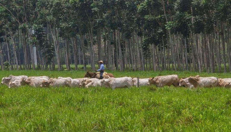 Planejamento: Recuperação florestal e expansão agrícola