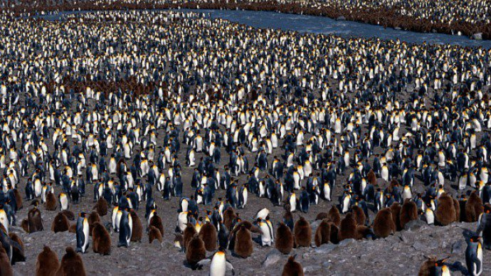 Última era do gelo dizimou pinguins na Antártida