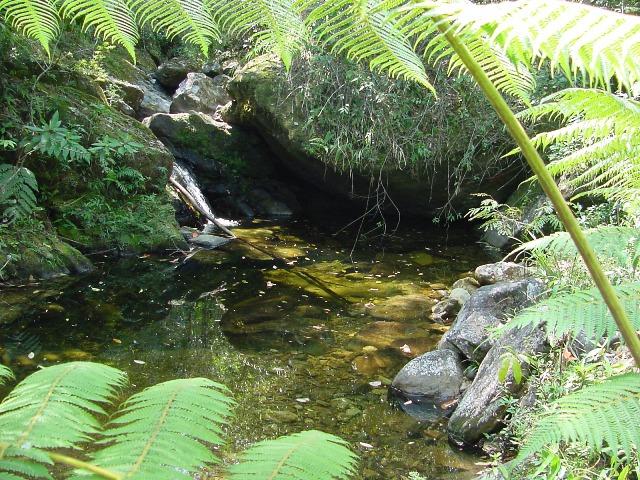 Reflorestamento de nascente de água