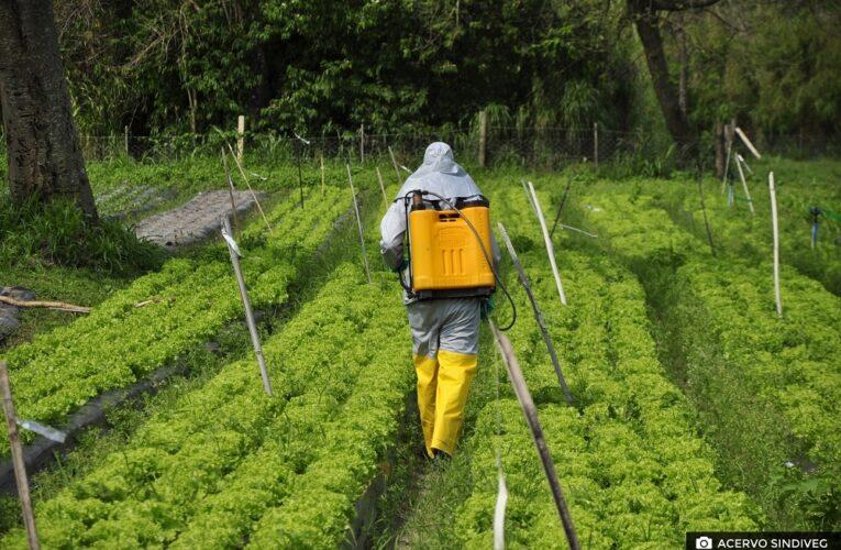 Sindiveg lança 2º módulo de treino para agricultores