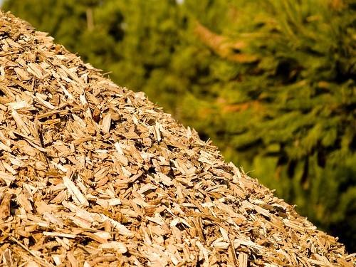 Pirólise de biomassa é tema de curso em Brasília