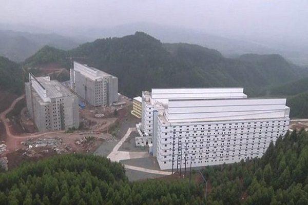 Criação de porcos em prédios de 13 andares