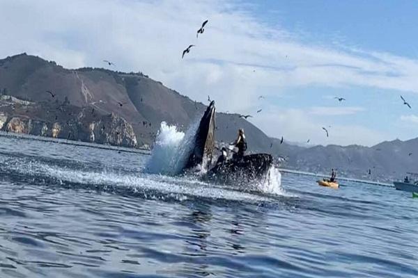 Baleia jubarte quase engole dupla de mulheres