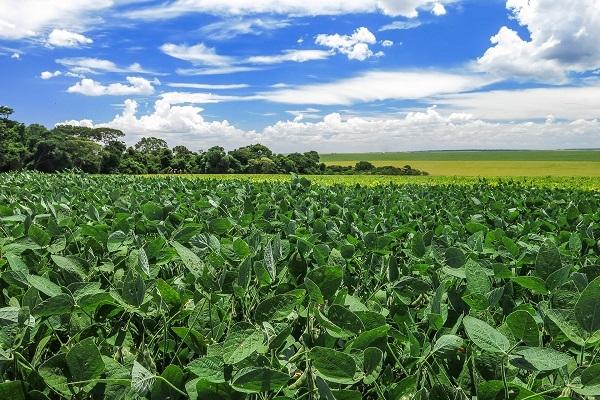 Produtores convivendo com La Niña na agricultura