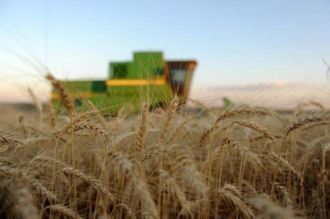 Produtores australianos adiam venda de trigo