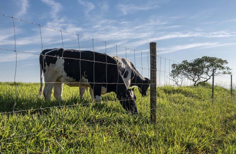 Pecuária nordestina exige cercas eficientes e duráveis