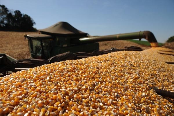 Preços do milho mantêm recordes de alta