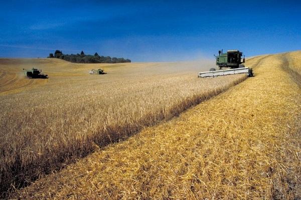 Safra 2020/21 de grãos no RS deve crescer 59,24%