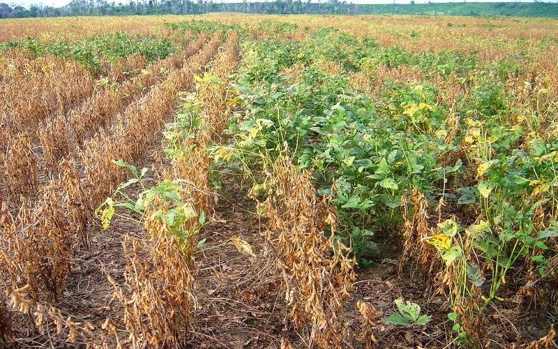 Retenção foliar em lavouras de soja