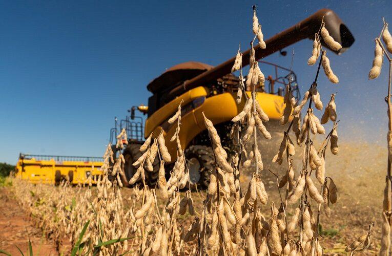 China faz planos para diminuir dependência de soja brasileira