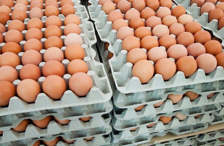 Exportação de ovos mantêm alta no mercado