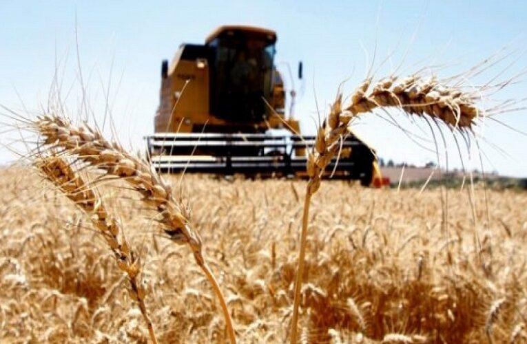A Inoculação e o aumento da produtividade do trigo