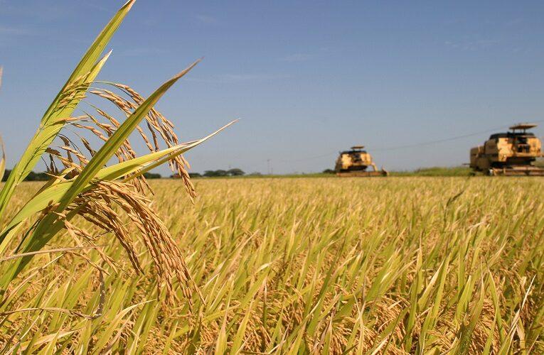 Mercado mexicano está aberto ao arroz brasileiro