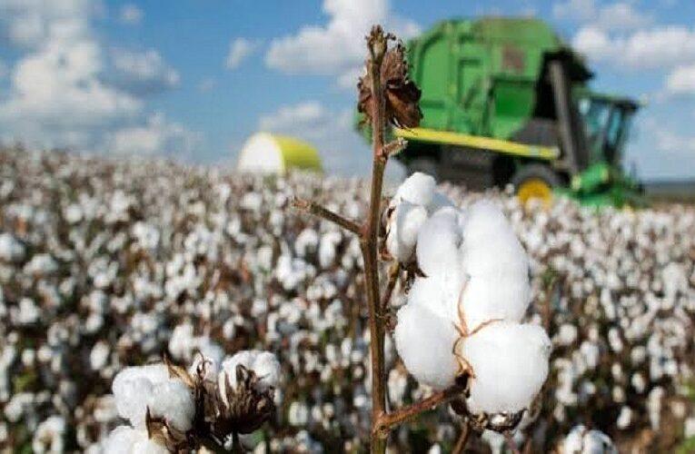 Mercado interno de algodão pressionado