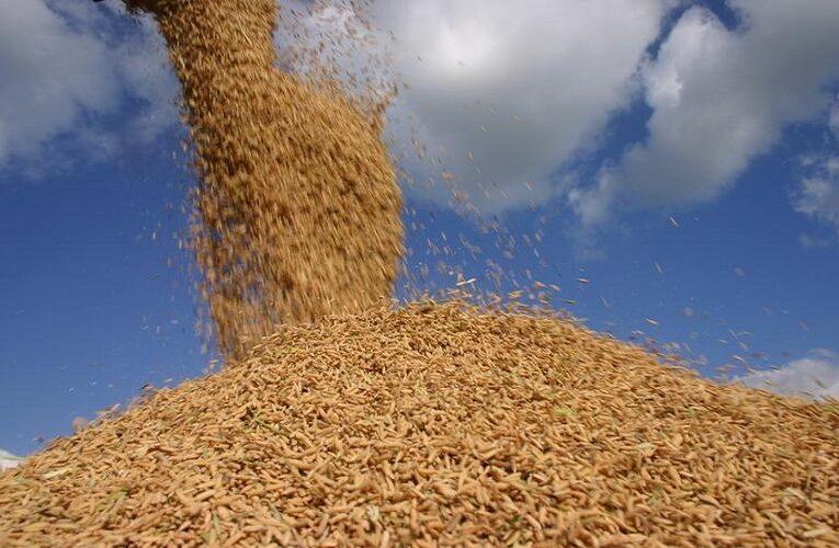 México libera importação de arroz brasileiro com tarifa zero