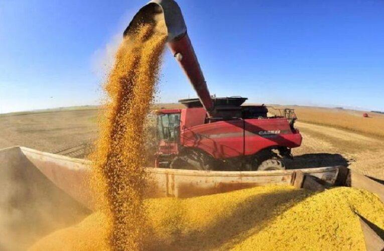 USDA eleva estimativa de safra de soja do Brasil