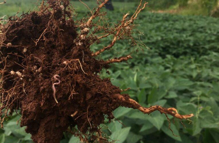 A importância do solo vivo para o sucesso econômico e produtivo da agricultura natural