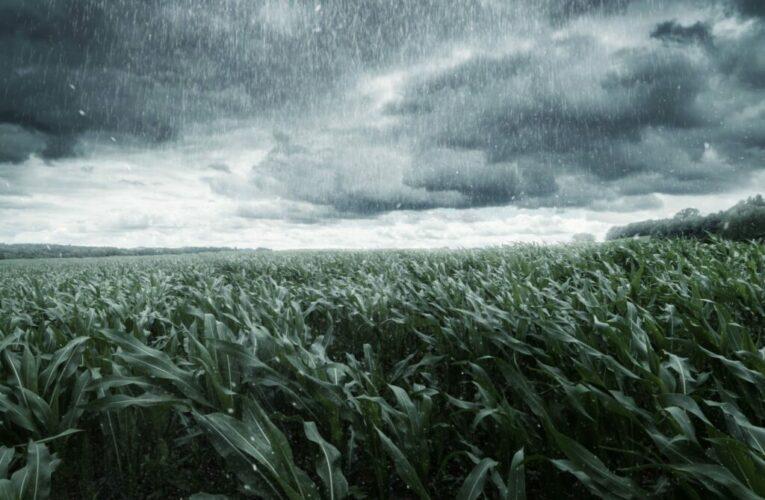 A importância de reduzir riscos no agronegócio.