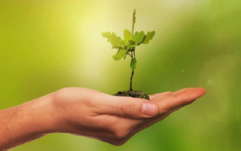 Licenciamento Ambiental é aprovado