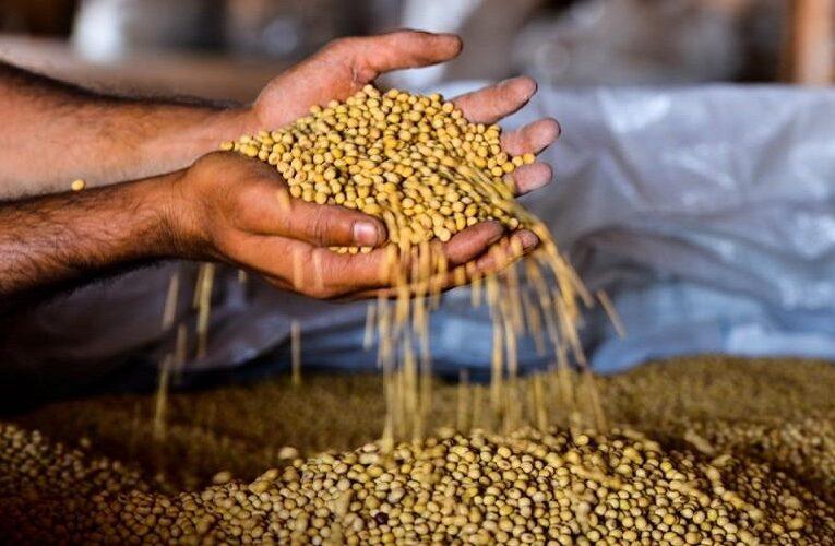 Presidente da aprosoja defende mudança na classificação dos grãos