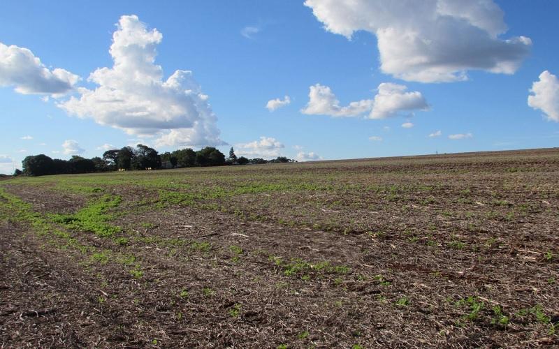 Preço de áreas agrícolas sobe 50% no Paraná